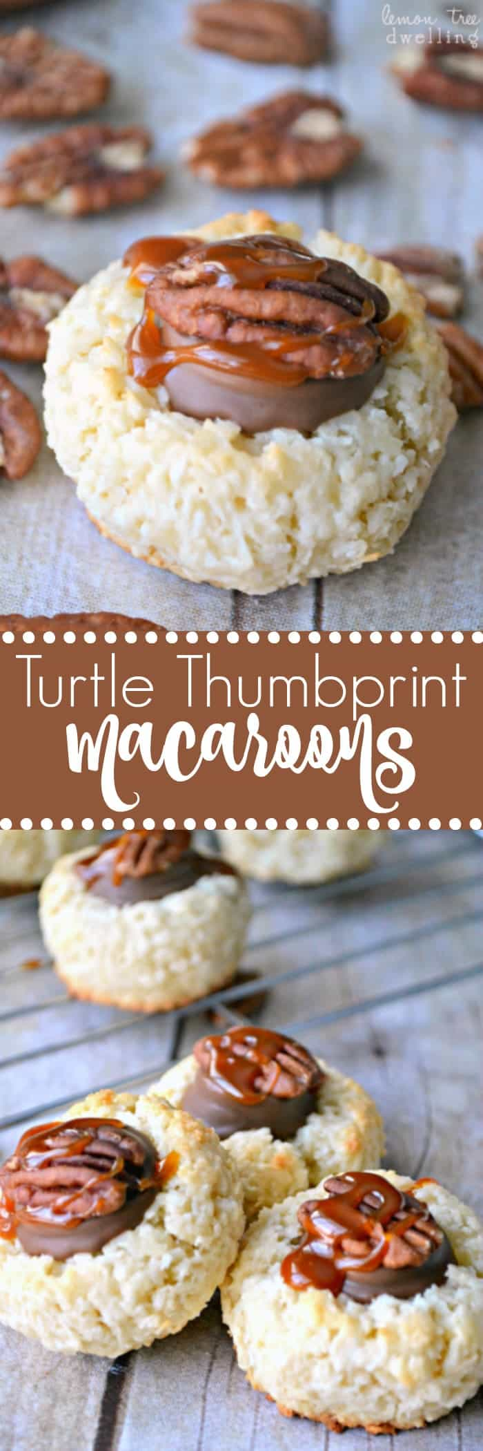 Turtle Thumbprint Macaroons are simply divine! These 4 ingredient coconut macaroons are topped with Rolos, pecans, and salted caramel sauce. Almond Joy meets Turtle...and it's love at first bite!